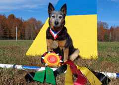 photo of dog with a medal